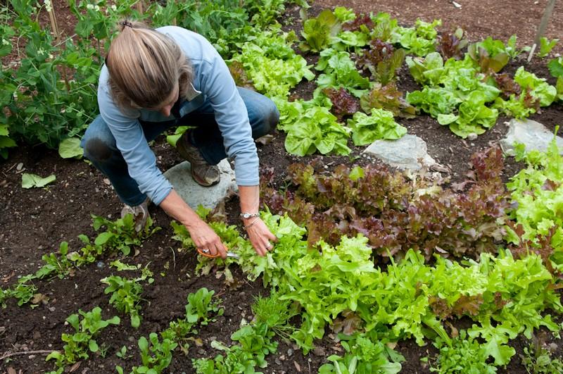 A Salad Lover's Garden