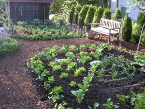 Ellen Ogden's ktichen garden