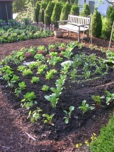 Tapestry of lettuce in Ellen Ogden's garden.