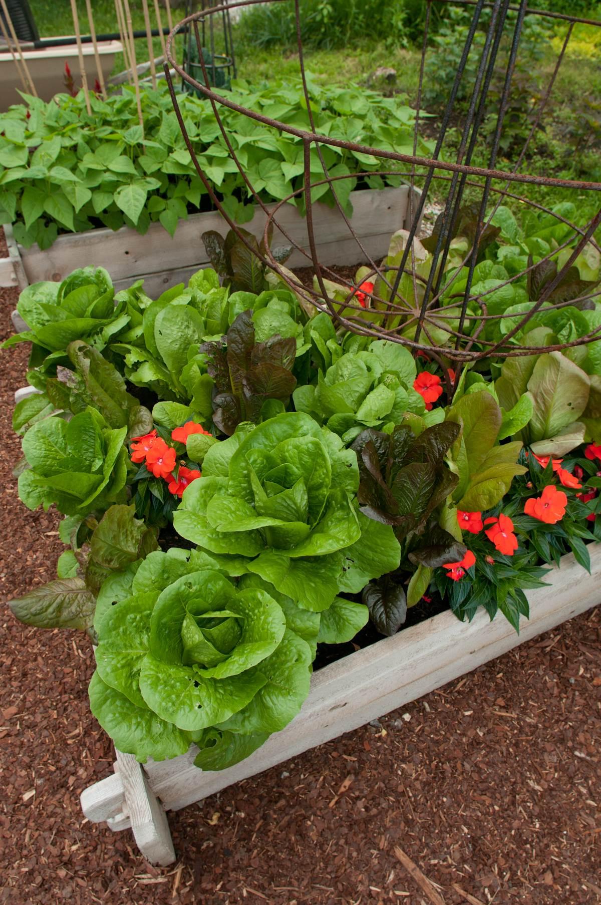Vegetable Garden Design Raised Vegetable Garden Design