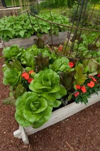 The Paintbox Garden design from The Complete Kitchen garden book.