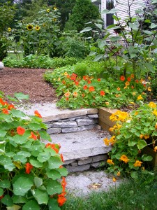 Stone Steps at Ellen's Kitchen Garden