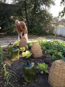 Winter Gardens At Colonial Williamsburg