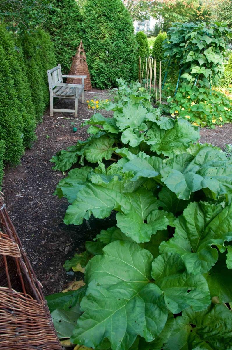 The Cooks Garden Ellen Ecker Ogden