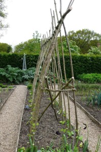 willow trellis system for vines