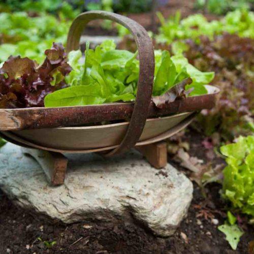 ellen ogden kitchen garden
