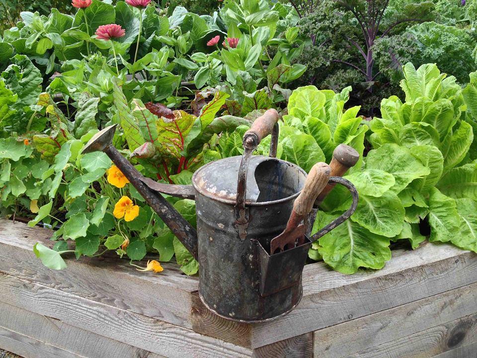 kitchen garden designs